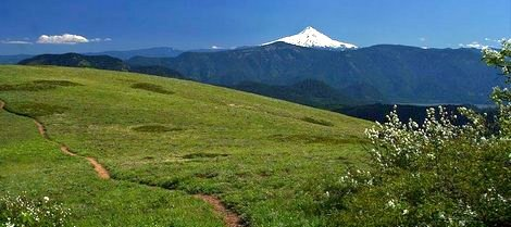 Mt Hood Oregon as seen from Grassy Knoll in the Gifford Pinchot National Forest