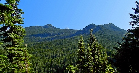 Looking south from the Sawtooth Mountain trail in the Indian Heaven Wilderness