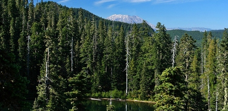 Mt St Helens peeking over ridge above Soda Peaks Lake in the Trapper Creek Wilderness