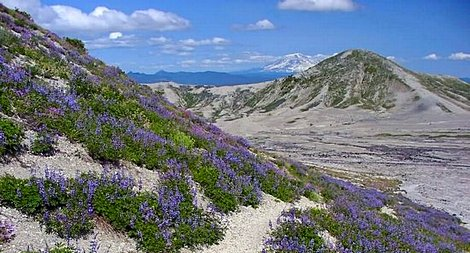 View from Windy Pass in the Mt St Helens National Volcanic Area